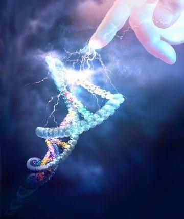 Criação DNA