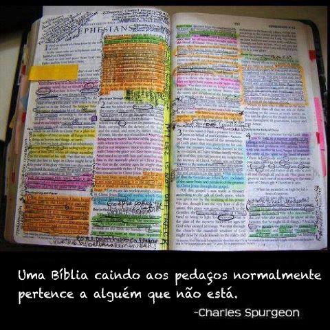 Biblia e seu estudioso