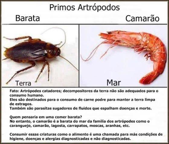 você come camarão?... ++ Barata-do-mar