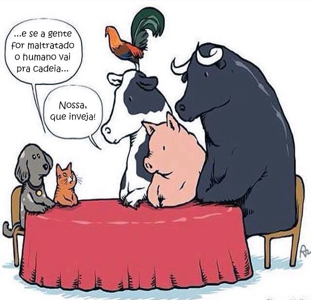 animais alimentos